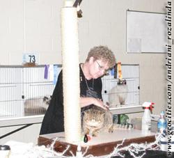 выставка кошек - ринг