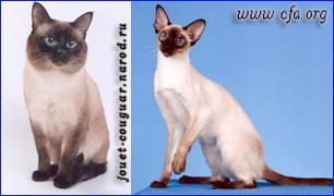Тайская и сиамская порода кошек