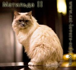 Матильда II