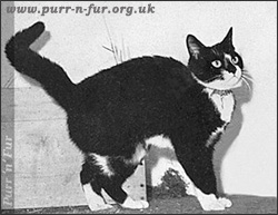 героический кот Саймон