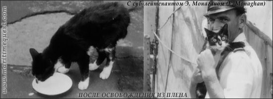кот Саймон после «инцидента на реке Янцзы»