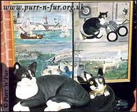 кот Саймон с фрегата Аметист