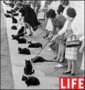 Кастинг кошек в Голливуде