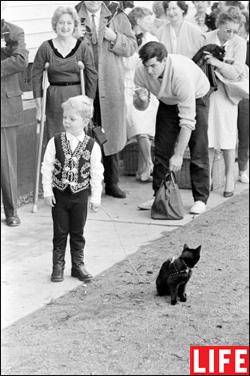 Кастинг черных котов к фильму «Истории ужаса» (Tales of Terror)