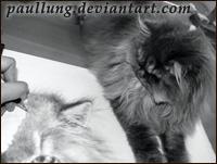 рисунки кошек Пола Лунг (Paul Lung)
