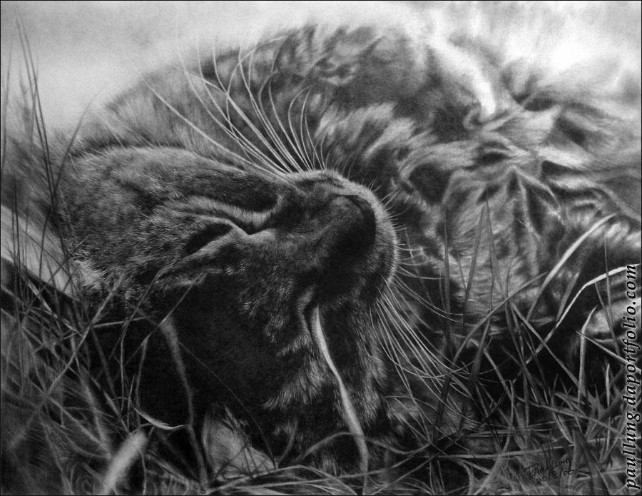 кошки Пола Лунга (Paul Lung)
