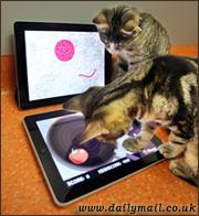 игры на iPad для кошек
