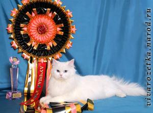 Домашние кошки на выставках МФА