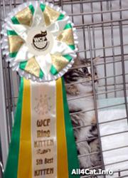 победитель WCF-ринга