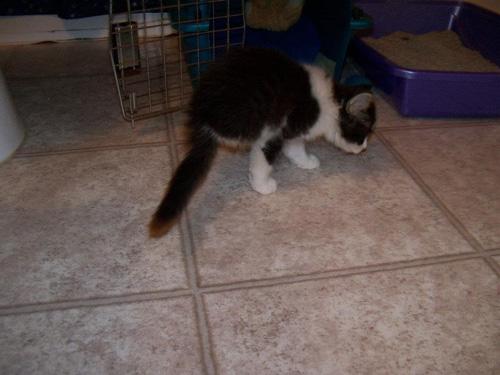 Анакин - котенок без задних ног