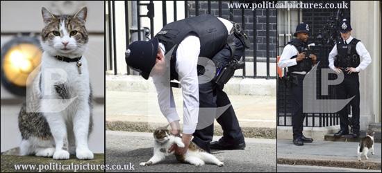 Ларри, кот в резиденции премьер-министра Дэвида Кэмерона