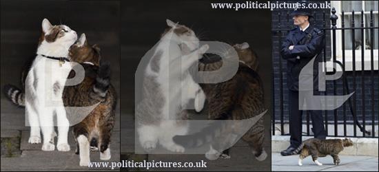 Выяснение отношений котов руководителей Великобритании