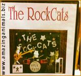 оркестр кошек The RockCats
