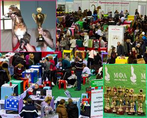 Выставки кошек - европейский ринг