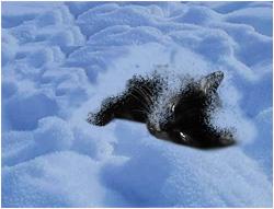 Замерзающая кошка