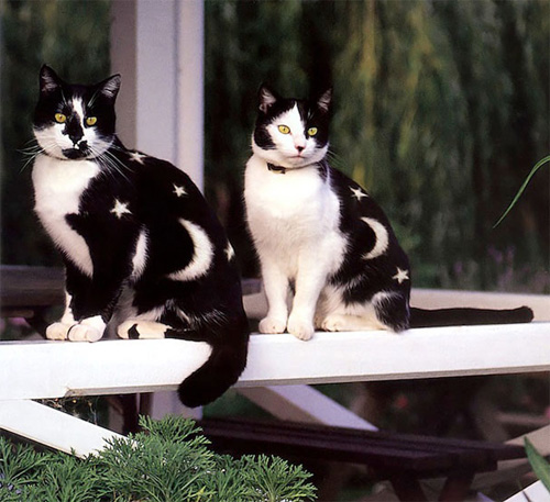Кошачий боди-арт