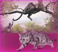 Приключение домашней кошки в Африке