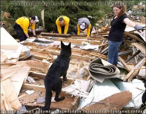 Спасение кошек после разгула торнадо в Оклахоме