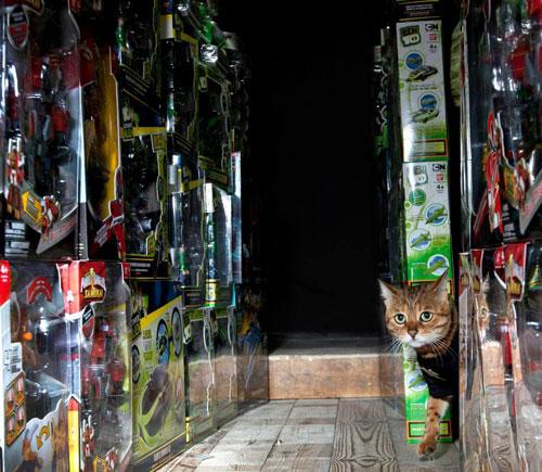 Майли за работой – кошачья охрана склада игрушек