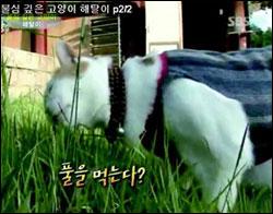 Необычная кошка-буддист