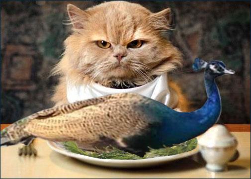 Кот съел павлина премьер-министра Пакистана