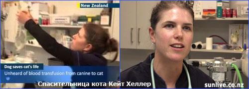 Ветеринарный врач Кейт Хеллер – организатор необычного донорства
