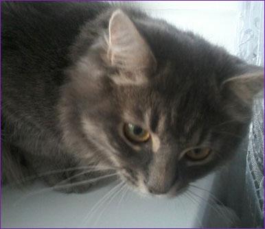 Выбираем средство против блох для кошек