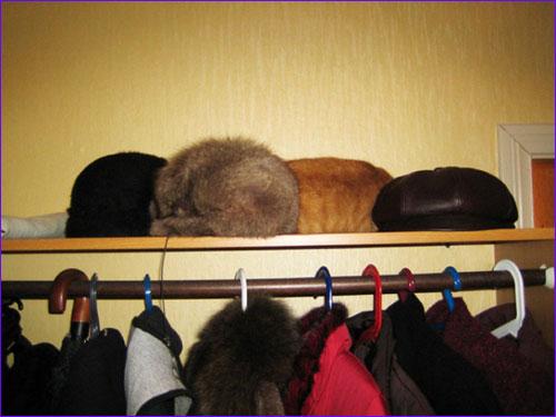 Кошачья маскировка