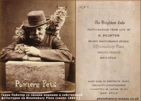 Гарри Поинтер (Henry «Harry» Pointer) и его Кошки Брайтона (The Brighton Cats)