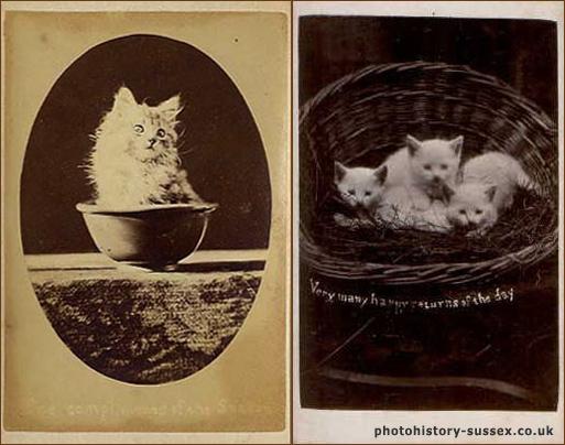 Кошки Брайтона (The Brighton Cats)