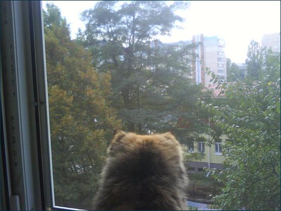 кошка на балконе