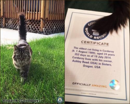 Кошки-долгожители - Кодрой (Corduroy)