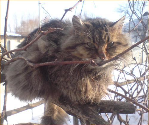 Кошки осени