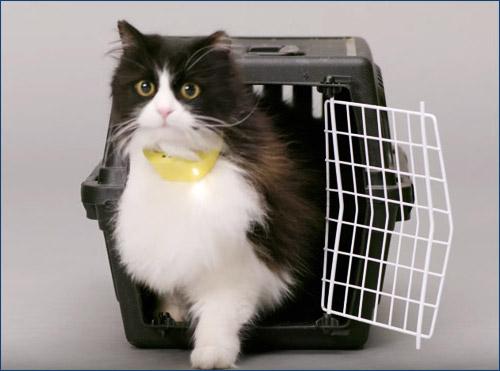 Ошейник-переводчик мяуканья кошек Catterbox