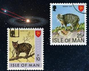 Мэнкс - бесхвостые кошки и комета