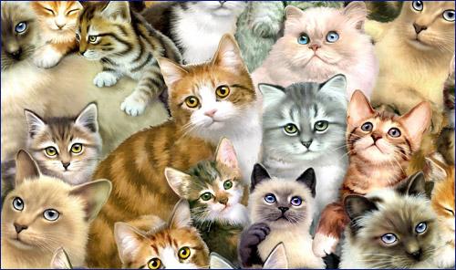 Калькулятор окрасов будущих котят