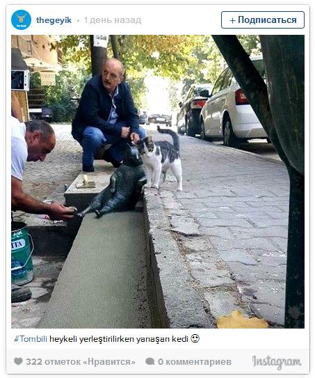 кот-философ Томбили