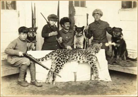 Плановый отстрел дальневосточного леопарда