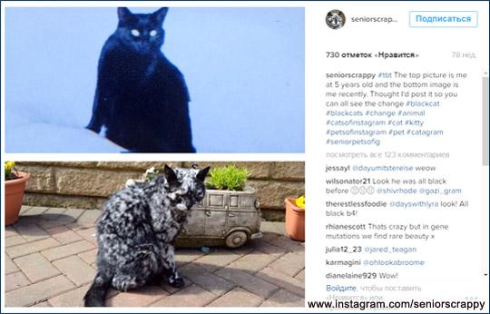 Семь лет Скреппи (Scrappy)  притворялся простым черным котом