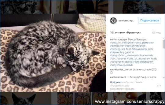 Звезда соцсетей - кот Скреппи (Scrappy)