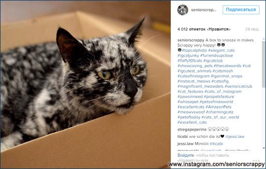 Кот и коробка - классика жанра