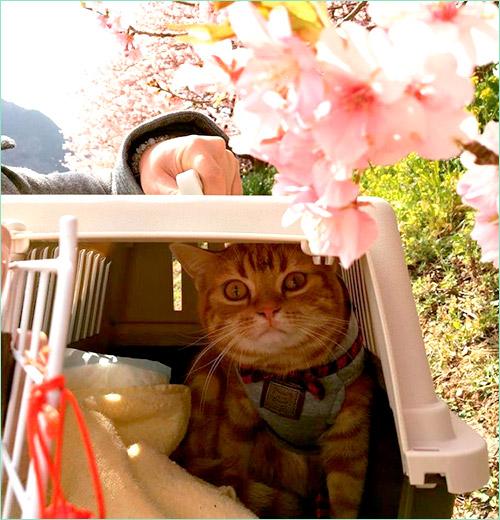 Домашние кошки в Японии