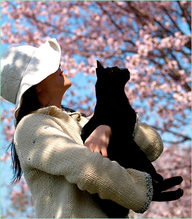 Участие кошек в ханами