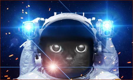 Кошки и Космос