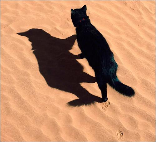 Милли - кошка-альпинист (catting)