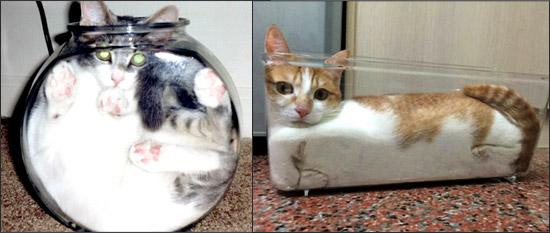 Кошки - это жидкость