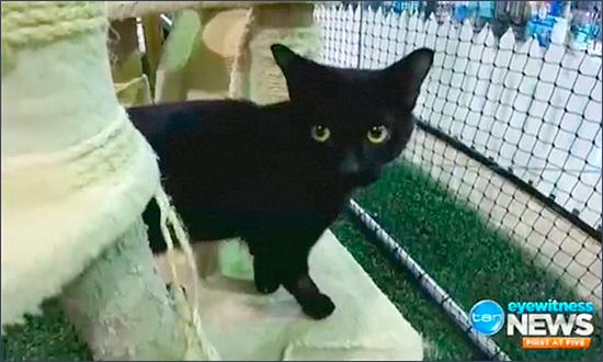 cat Tipsy спасенный водкой