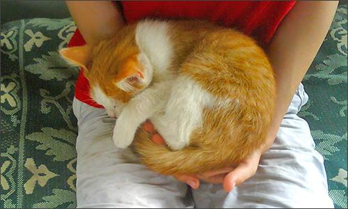 мурчанье кошки