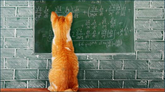 Кошки и формулы
