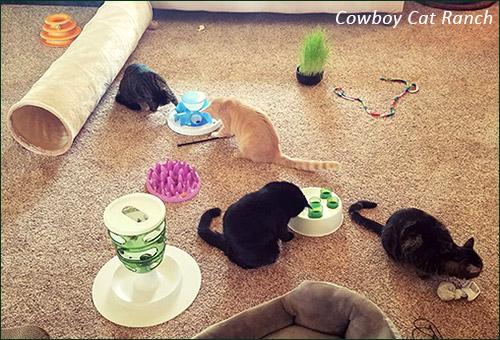 Центр-приют Cowboy Cat Runch